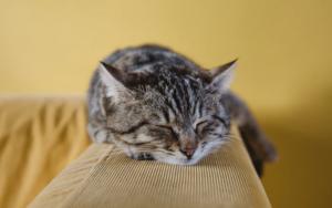 Cat sleeping: